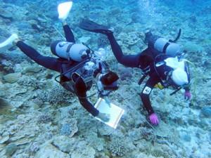 サンゴ礁の健康状態を調べるダイバー=5月27日、与論町の茶花沖(海の再生ネットワークよろん提供)