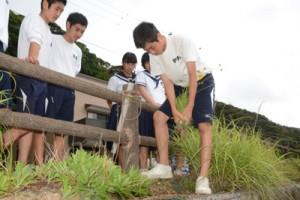 校区内の外来種を調査し駆除した龍南中の生徒たち=5月31日、龍郷町