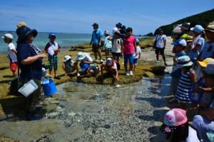 浅瀬で海の生き物を観察する「ふしぎ探究塾」の受講者=22日、奄美市名瀬大浜海浜公園