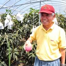 ミカンコミバエの影響が心配された中、マンゴーの収穫・出荷期を迎え、「一安心」と笑顔で語る村山さん=24日、和泊町