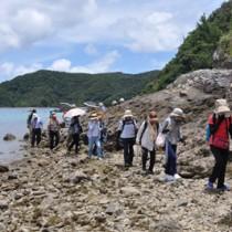 島尾敏雄とミホ夫人が会っていた浜辺を歩く参加者=8日、加計呂麻島