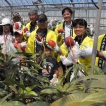 紅色に熟したマンゴーを手に収穫を祝う関係者ら=26日、徳之島町亀津
