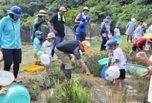 水辺の生き物を観察する子どもら=30日、奄美市名瀬の大川ダム