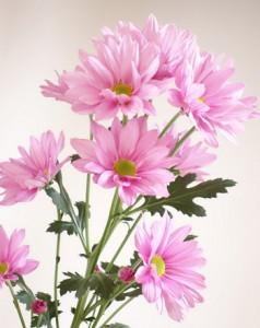 県農業開発総合センターが育成した新品種「サザンサマーピンク」(同センター花き部提供)
