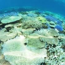 サンゴの白化現象が確認された大浜海岸のリーフ内=13日、興克樹さん撮影
