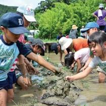 泥染めのミニタオル作りに挑戦した児童生徒ら=15日、奄美市名瀬
