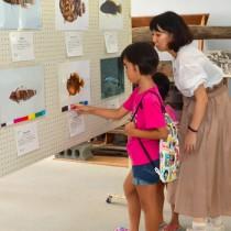 大島海峡で発見された新種の海洋生物を紹介する写真展=8日、瀬戸内町立図書館