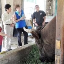 闘牛の説明を受けるシルバーシー・クルーズ社のデラニー氏(右から2人目)=28日、伊仙町なくさみ館