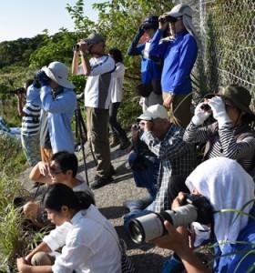 「タカ柱」に歓声が上がった観察会=10日、奄美市名瀬の朝戸峠