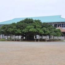天皇、皇后両陛下がご覧になる予定の国頭小「日本一のガジュマル」=沖永良部島・和泊町