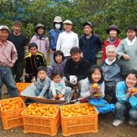 阿室校区活性化対策委員会が実施したタンカン収穫=2015年2月、平田集落(宇検村提供)
