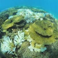 サンゴの大規模な白化現象が確認された大浜海岸の礁池=12日、奄美市名瀬(興克樹さん撮影)