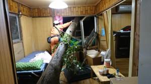 奄美市名瀬の民家に飛び込んだ倒木(提供写真)