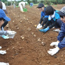 丁寧に球根を植え付ける作業参加者=15日、和泊町
