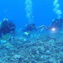 サンゴ礁の健康状態を調べたヨロン島リーフチェック=11日、与論島・供利沖(NPO法人海の再生ネットワークよろん提供)