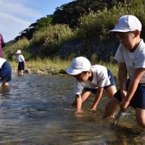 川底を耕してリュウキュウアユの産卵環境を整える児童ら=1日、奄美市住用町