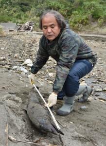 漂着したマダライルカとみられる死骸=20日、奄美市住用町