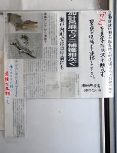 せとうち海の駅に掲示されたワニへの注意を呼び掛けるチラシ=6日、瀬戸内町古仁屋