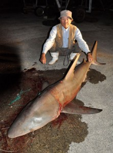 釣り上げられたサメと水本さん=15日、伊仙町前泊港