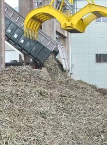 製糖シーズンが始まり工場に搬入されるサトウキビ=20日、徳之島町徳和瀬