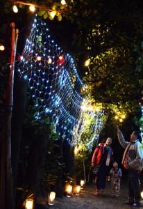 集落のフクギ並木を彩る「ふくぎナイト」=17日、大和村国直