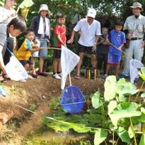 プロジェクトの一環でトウギョなどの生物を水田で調査するファングル塾の会員と子どもら=14年9月、知名町瀬利覚