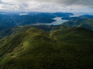 亜熱帯照葉樹に覆われる奄美の森