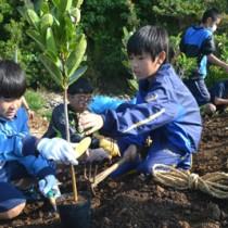 「ふるさとの森に」との願いを込め植樹を行う参加者=21日、与論町多目的屋外運動場