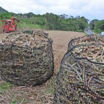 ハーベスターで収穫されたサトウキビ=30日、奄美市笠利町須野