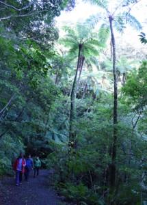 奄美大島の観光スポットで世界自然遺産登録が期待される金作原林道=2017年12月、奄美市名瀬
