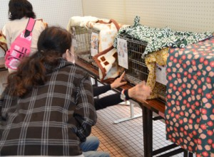 里親希望者約20組が猫と面会した譲渡会=25日、奄美市名瀬