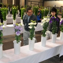 前年から大幅増の81点が出品された切り花品評会=21日、知名町