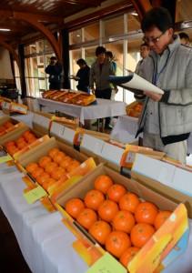 奄美群島たんかん品評会に出品された生産者自信のタンカン果実=7日、奄美市名瀬の農業研究センター