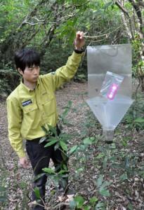 昆虫捕獲用のトラップを確認する環境省の職員=19日、徳之島中部の剥岳林道