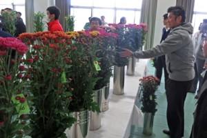 (よこ)71点を審査した切り花品評会=6日、和泊町(提供写真)