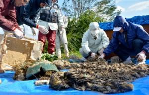 砂の混入具合やゴミへの付着状態に応じ漂着物を分別する職員ら=6日、奄美市名瀬の朝仁海岸