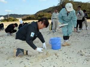 砂浜で漂着油の回収作業を行う三反園知事(左手前)=15日、奄美市名瀬の朝仁海岸