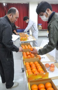 L、2Lの2部門に計23点が出品された徳之島地区たんかん品評会=5日、徳之島町亀津
