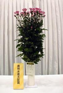 農林水産大臣賞に選ばれた末川さんのスプレーギク=1日、鹿児島市のかごしま県民交流センター