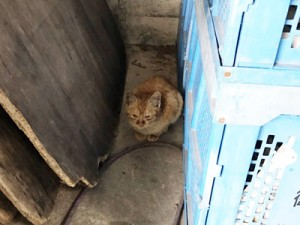 ストックヤード内で見つかった子猫(提供写真)