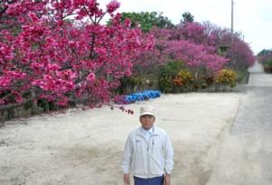 2000年から定植活動を続けている児島さんと見頃を迎えている桜並木=13日、徳之島町母間