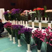 出品された切り花を鑑賞する関係者=1日、鹿児島市のかごしま県民交流センター