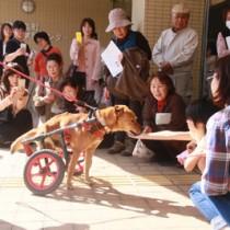 車いす犬ラッキーとの触れ合い交流で、飼い主の責任などについて理解を深めた参加者ら(提供写真)