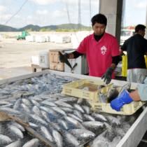 防鳥ネットで囲って出荷時の衛生管理を徹底した奄美漁協=29日、奄美市笠利町