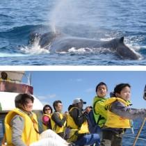 奄美近海に現れたザトウクジラ(上)。クジラを観察した奄美塾の調査隊=11日、龍郷町沖