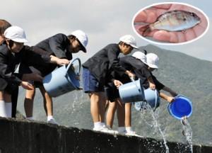 マダイの稚魚(円内)を放流する市小中学校の児童たち=1日、奄美市住用町