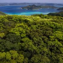 奄美の春を彩る新緑の森=31日、龍郷町の奄美自然観察の森(本社小型無人機で撮影)
