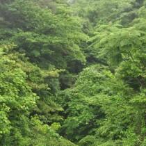 国立公園に指定された国内最大級の亜熱帯照葉樹の森=奄美大島