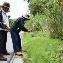 道路沿いに広がるスギナを確認する奄美の自然を考える会のメンバーら=9日、奄美大島の本茶峠