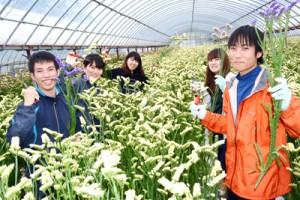 切り花の収穫など、農業体験のため奄美大島を訪れている大学生ら=6日、奄美市笠利町